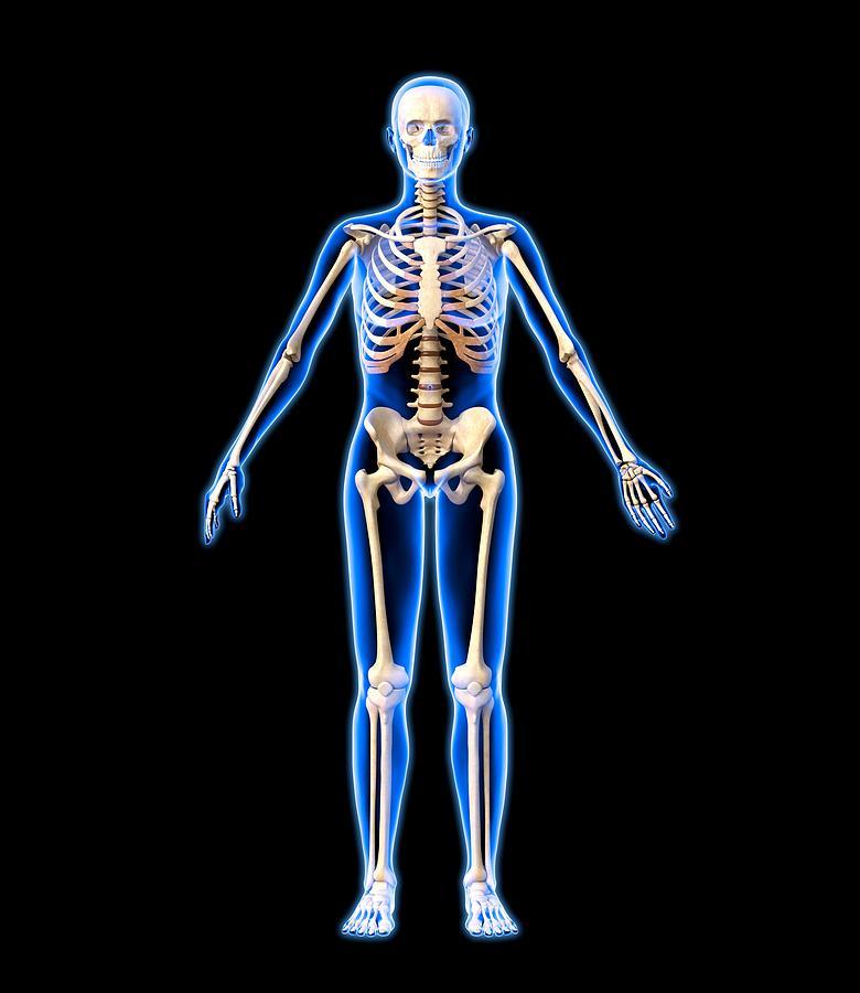 Human Photograph - Female Skeleton, Artwork by Roger Harris