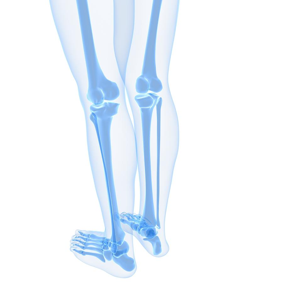 Leg Bones, Artwork Digital Art