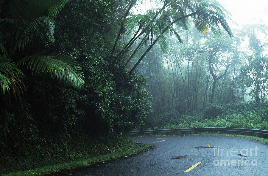 Misty Rainforest El Yunque Photograph