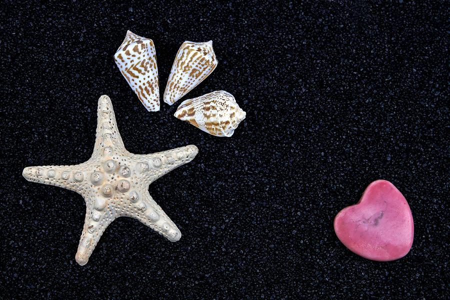 Starfish On Black Sand Photograph