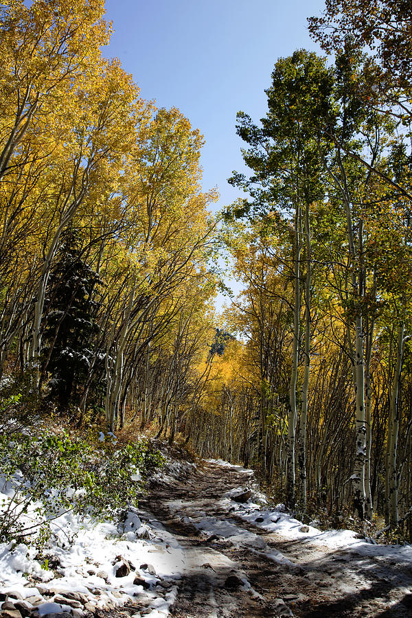 Rocky Mountain Fall Photograph