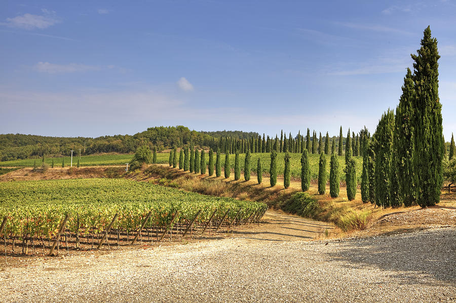 Vineyards Photograph - Tuscany by Joana Kruse