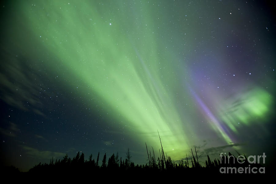 Aurora Borealis Near Drayton Valley Photograph