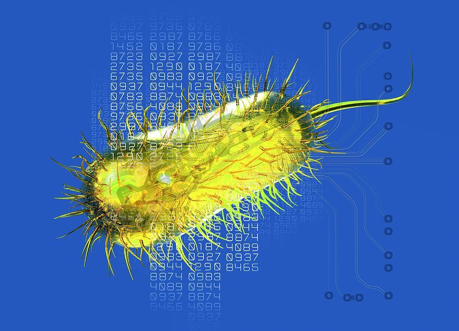 Escherichia Coli Photograph - Bacterial Computing, Conceptual Artwork by Victor Habbick Visions