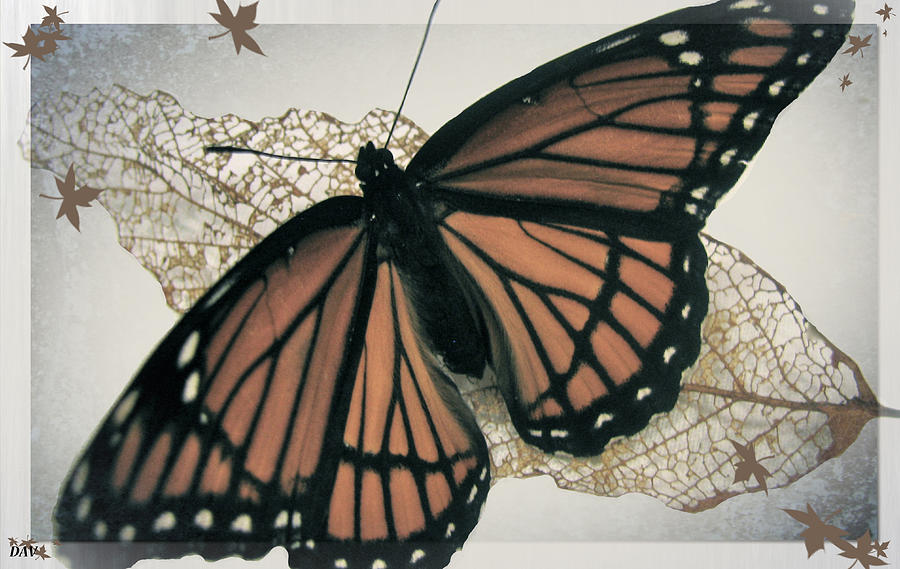 Butterfly Design Collection Photograph  - Butterfly Design Collection Fine Art Print