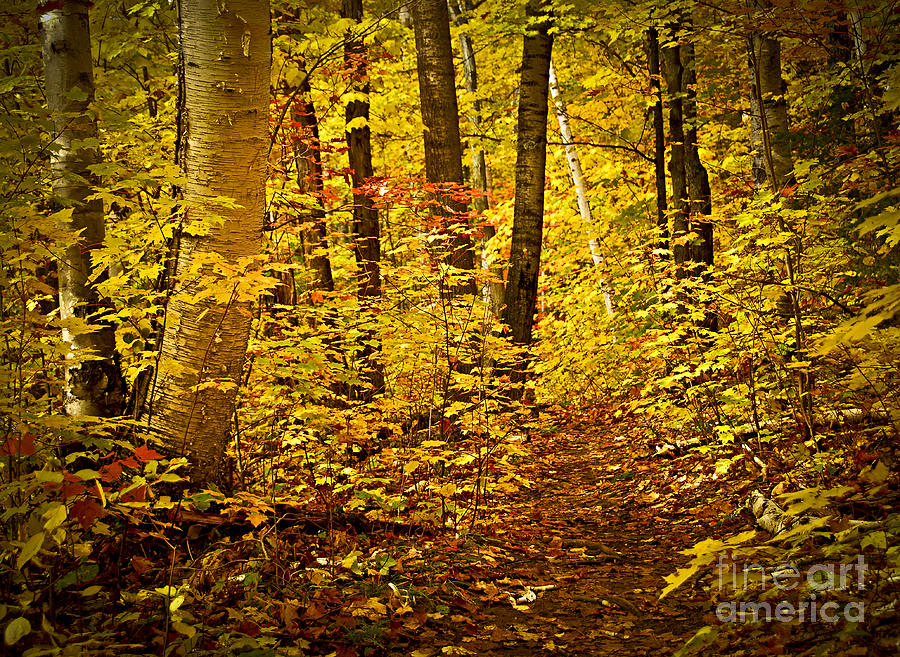 Fall Forest Photograph  - Fall Forest Fine Art Print