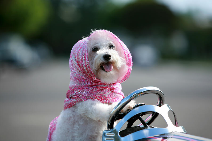 Fifi Goes For A Ride Photograph