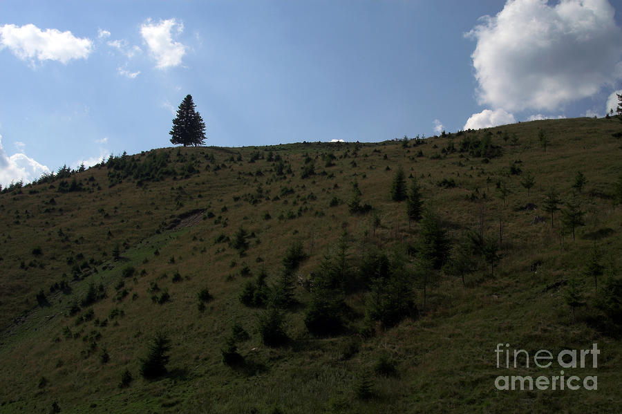 Nature Photograph - Landscape by Odon Czintos