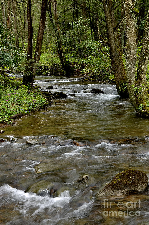 Craig Run Photograph - Monongahela National Forest by Thomas R Fletcher