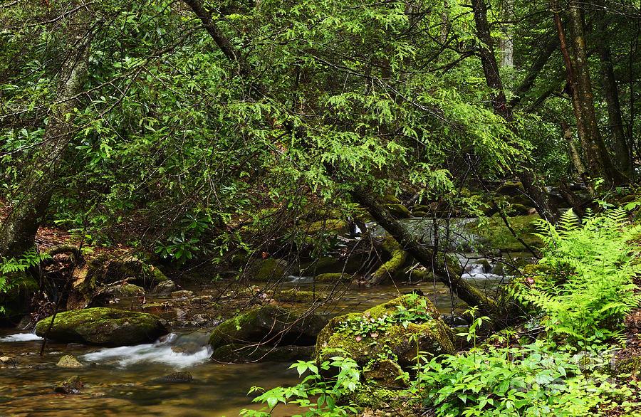 Rushing Mountain Stream Photograph