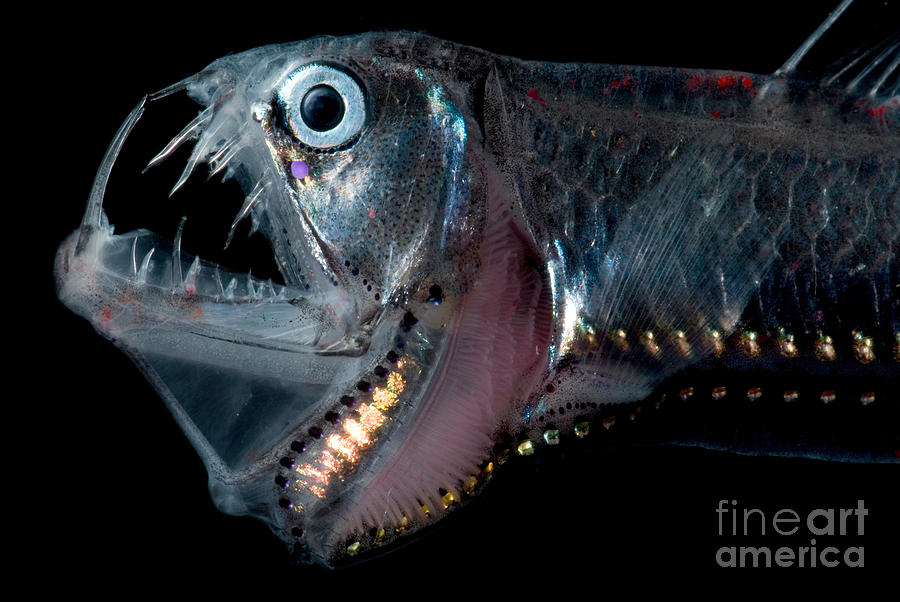Ugly Fish Pictures 10 Photos Of Hideous Sea Creatures