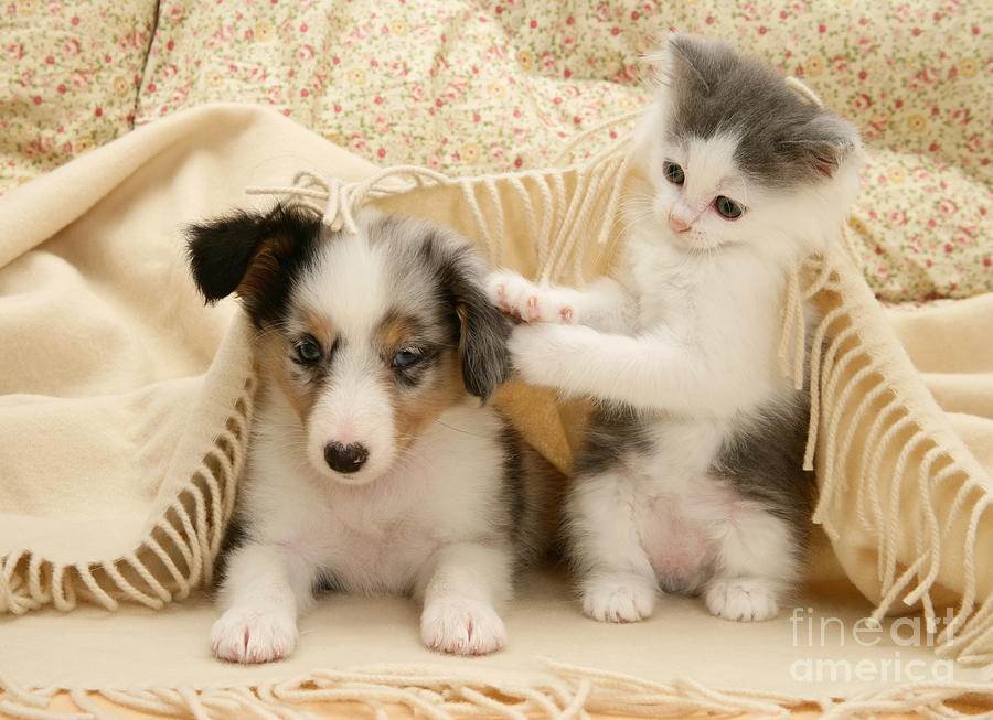 Kitten And Pup Photograph