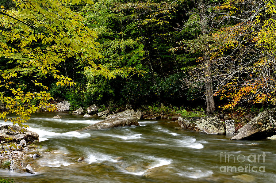 West Virginia Photograph - Fall Along Williams River by Thomas R Fletcher