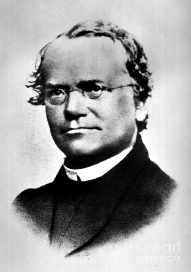 Gregor Mendel, Father Of Genetics Photograph  - Gregor Mendel, Father Of Genetics Fine Art Print