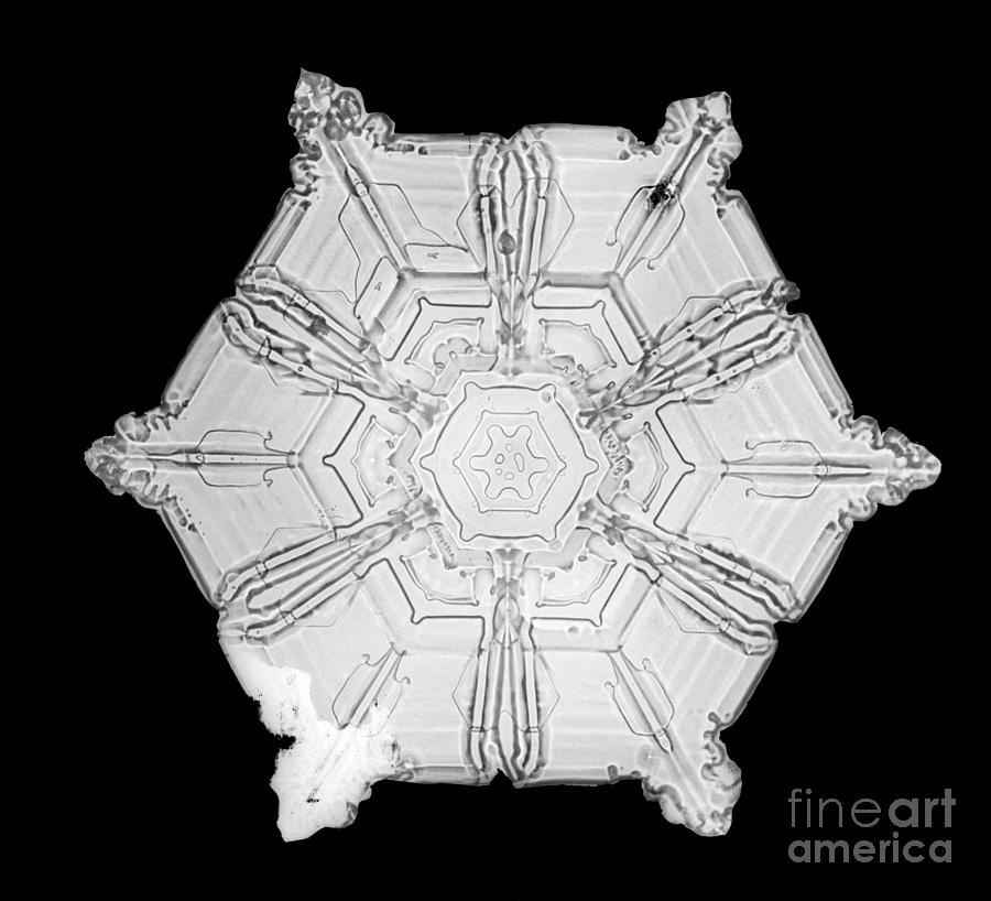 Snowflake Photograph - Snowflake by Science Source