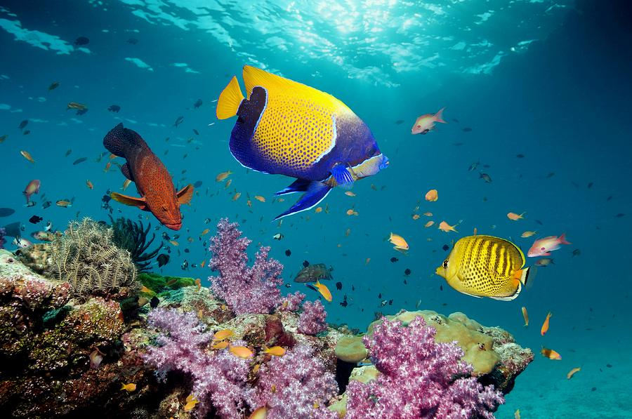 Tropical Reef Fish Photograph
