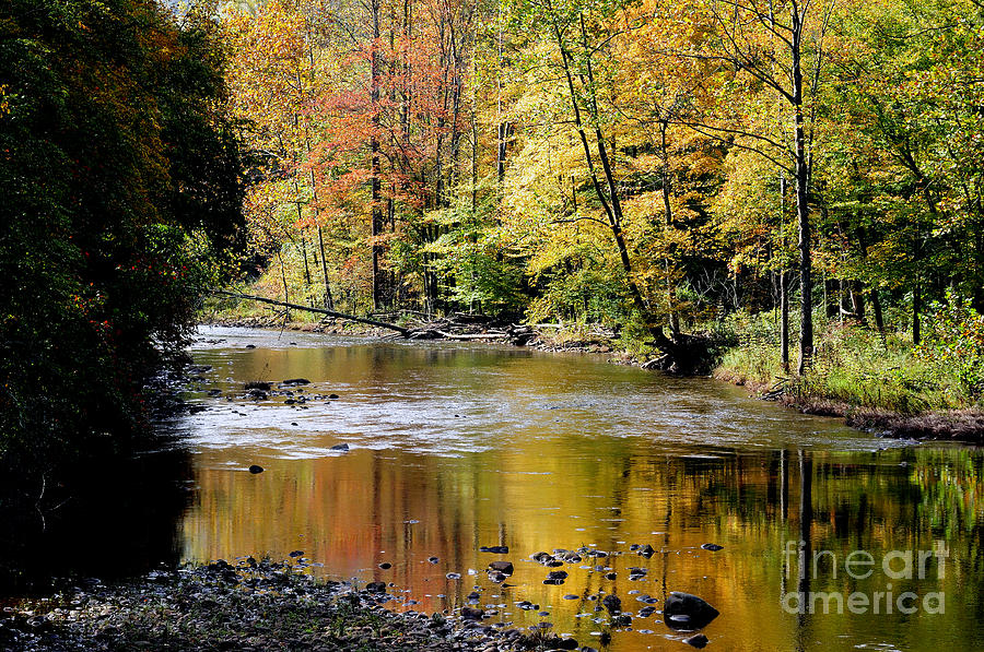 Williams River Autumn Photograph