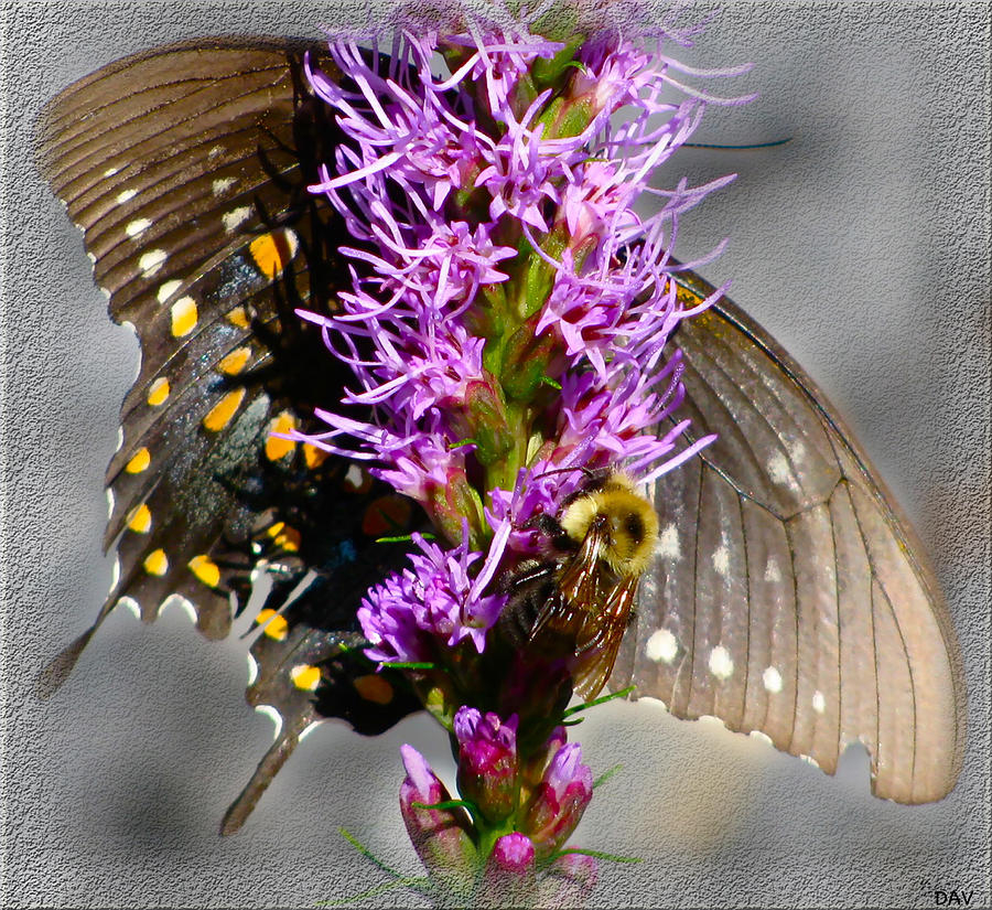 Butterfly And Bee Photograph - Butterfly Design Collection by Debra     Vatalaro