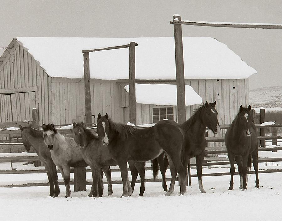 Horses Photograph - 71 Ranch by Diane Bohna