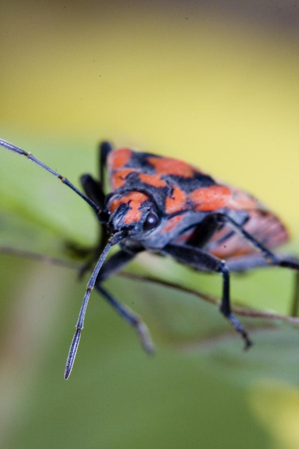 Bug Photograph  - Bug Fine Art Print