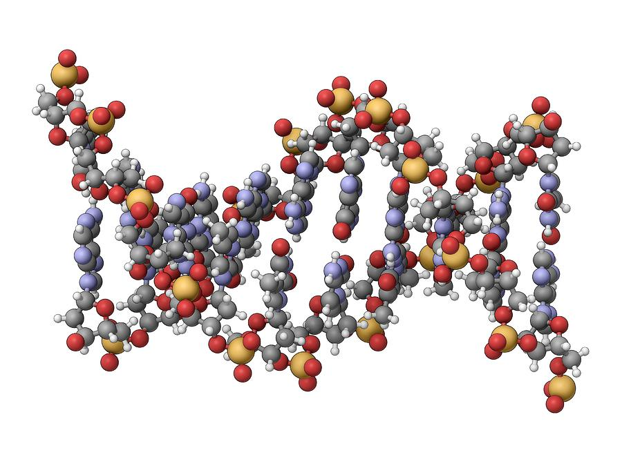 an overview and description of the deoxyribonucleic acid dna Rosalind franklin obtained images of dna using the structure of deoxyribonucleic acid (dna) on a single dna strand codes for one specific amino acid.