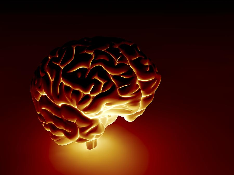 Human Brain, Artwork Photograph