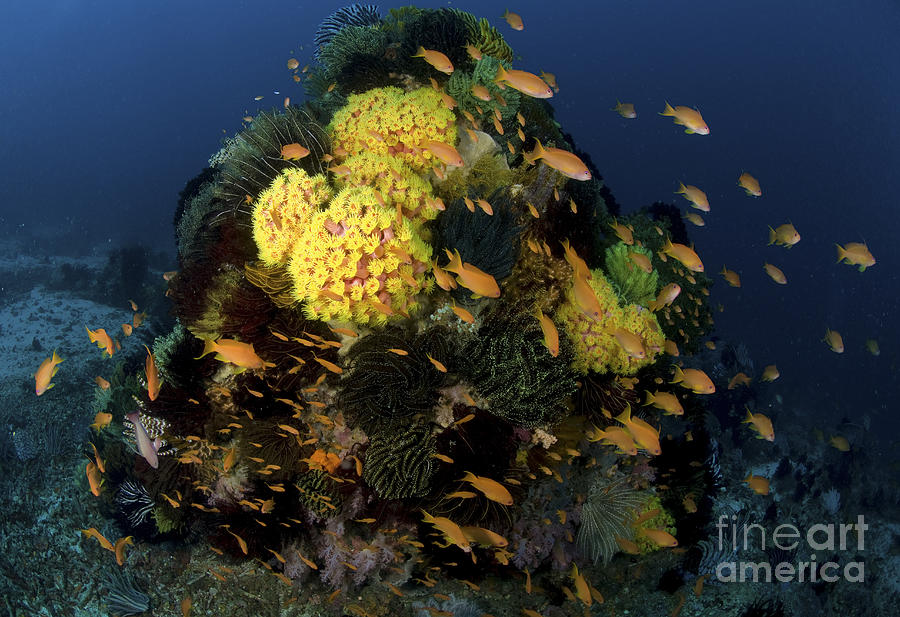 Reef Scene With Coral And Fish is a photograph by Mathieu Meur which ...