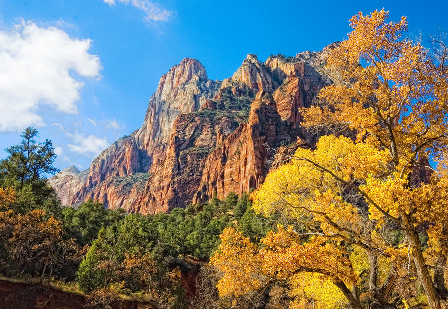 Zion National Park Utah Photograph  - Zion National Park Utah Fine Art Print