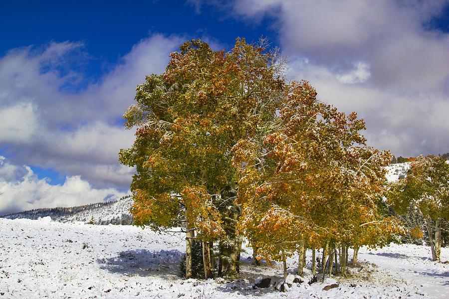 Rocky Mountain Fall Photograph