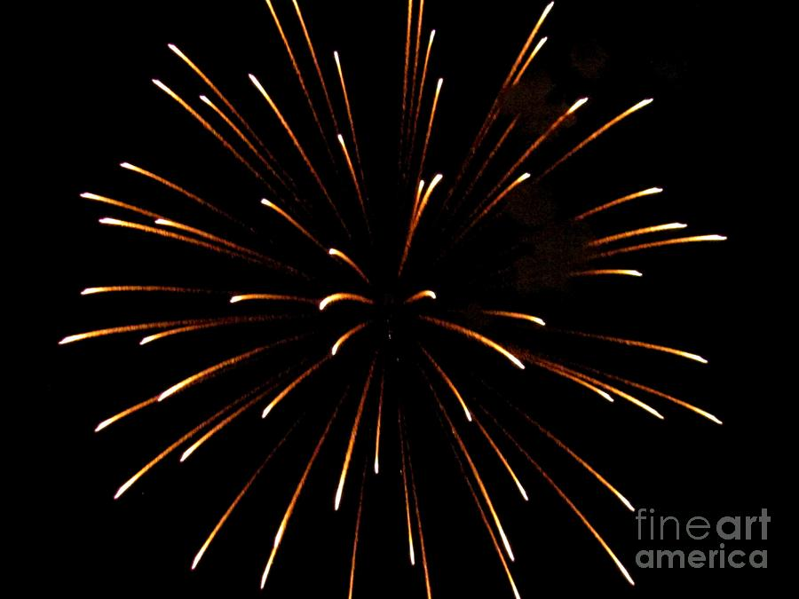 A 4th Of July Flower Photograph  - A 4th Of July Flower Fine Art Print