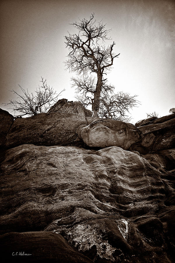 A Barren Perch - Sepia Photograph  - A Barren Perch - Sepia Fine Art Print