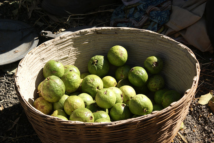A Basket Full Of Guavas Just Outside Bhopal Photograph