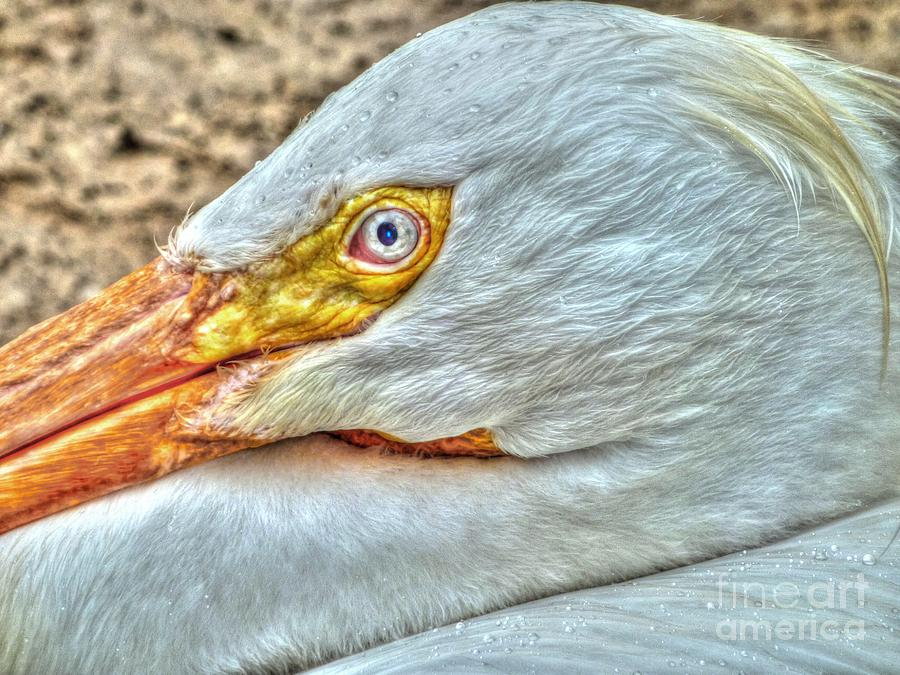A Birds Eye View Photograph  - A Birds Eye View Fine Art Print