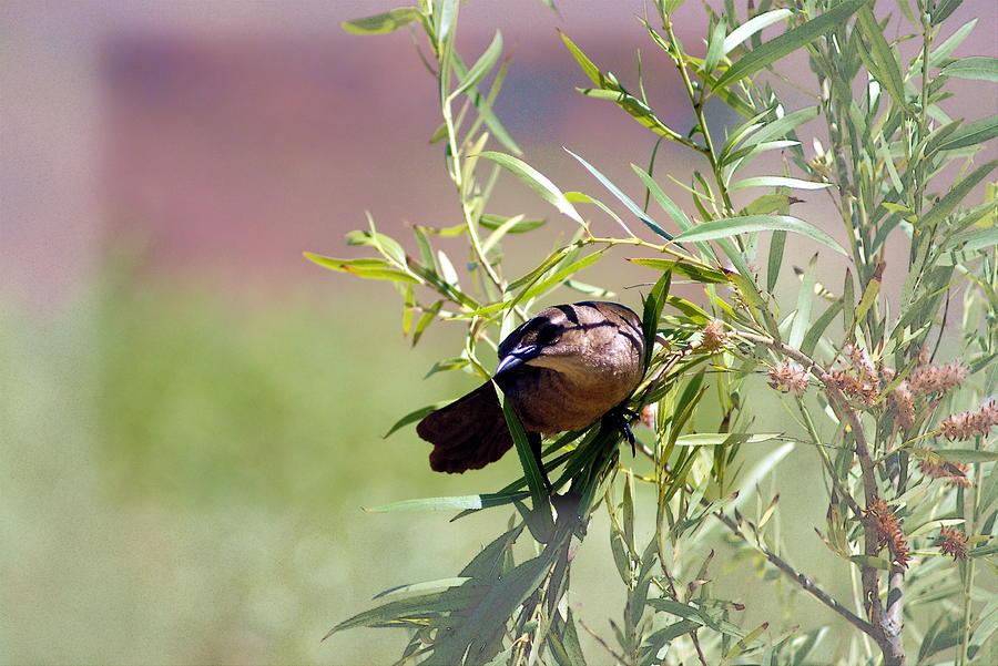 A Birds Landing Photograph