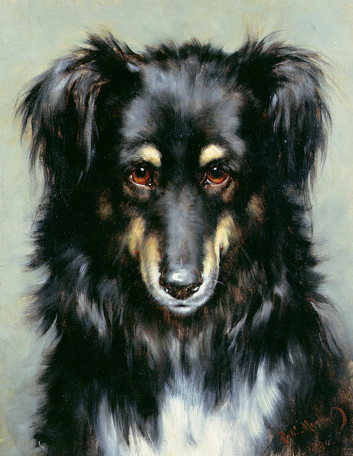 A Black And Tan Collie Painting