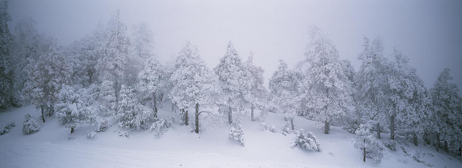 A Blizzard On Spruce Mountain Photograph