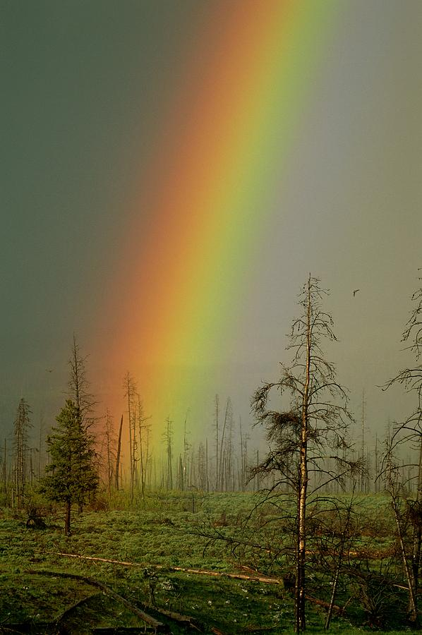 A Brilliantly Colored Rainbow Ends Photograph