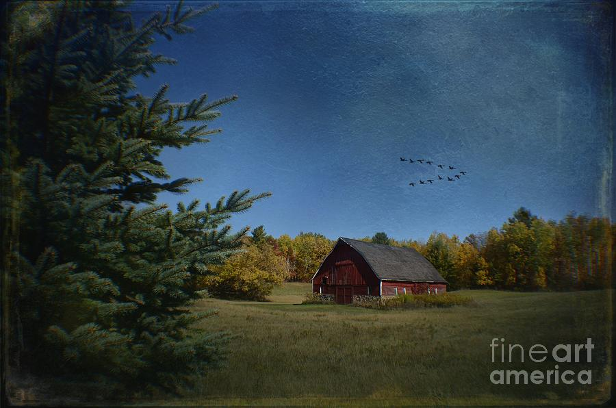 A Brush With Fall Photograph  - A Brush With Fall Fine Art Print