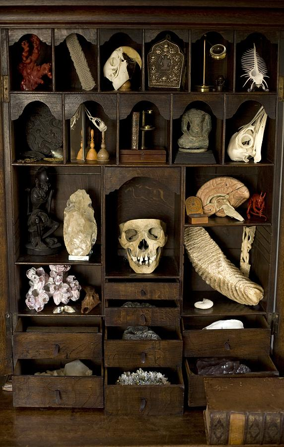 Cabinet Of Curiosities Photograph A Cabinet Of Curiosities By Paul D