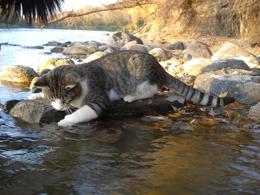 A Cat Goes Fishing Photograph By Kent Lorentzen