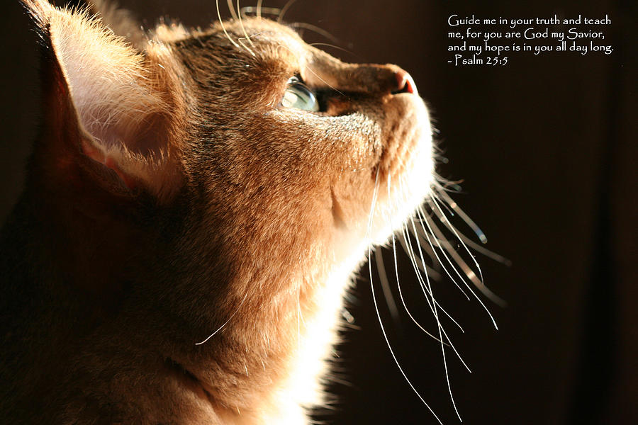 A Cat Prayer Photograph  - A Cat Prayer Fine Art Print