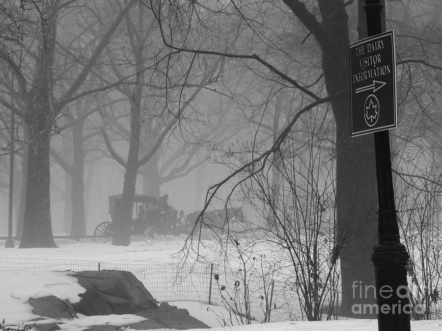 A Central Park Carriage Ride Photograph