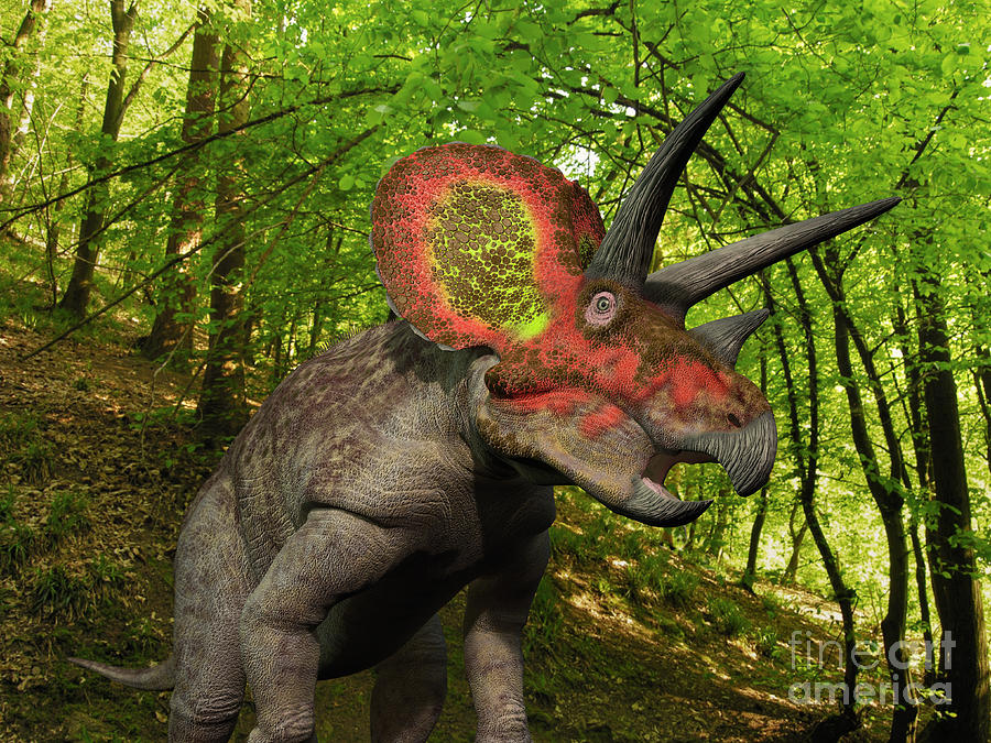 A Colorful Triceratops Wanders Digital Art  - A Colorful Triceratops Wanders Fine Art Print