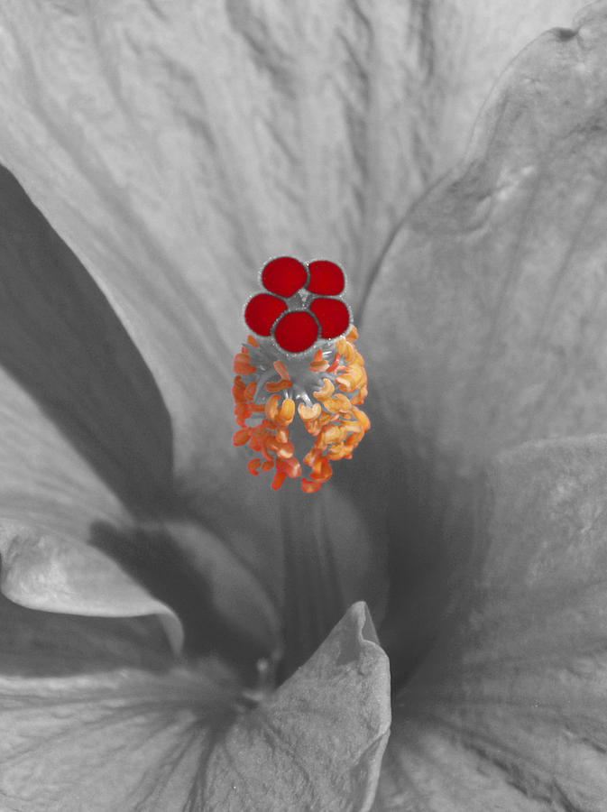 A Dash Of Color Hibiscus Photograph