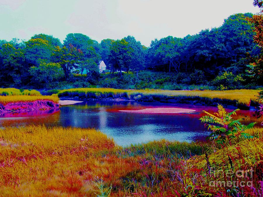 A Day At The Marsh In Cape Cod Photograph  - A Day At The Marsh In Cape Cod Fine Art Print