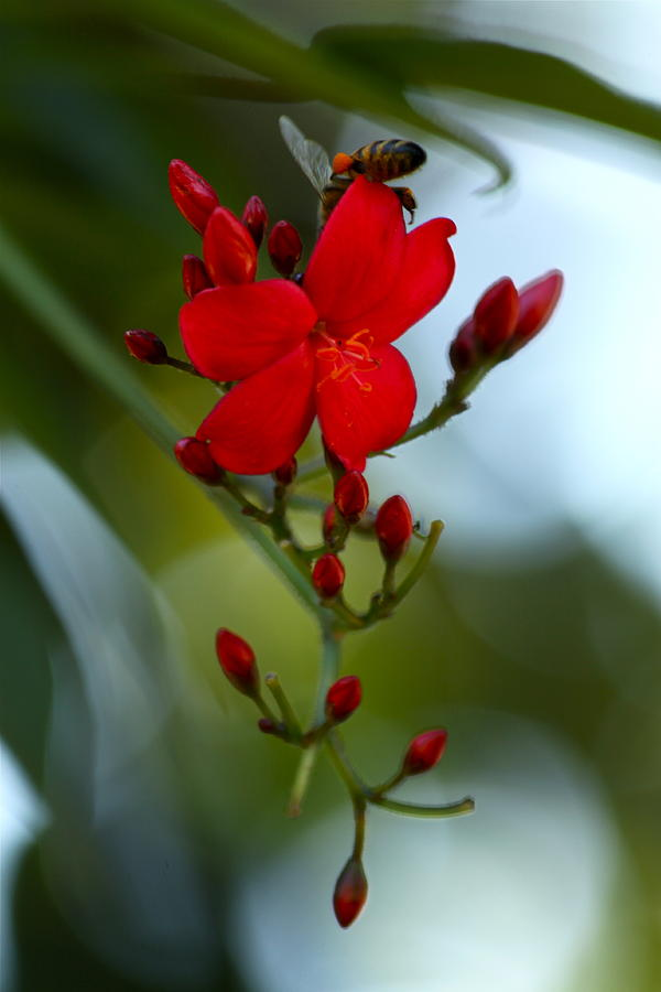 Red Photograph - A Delicate Embrace by Karon Melillo DeVega