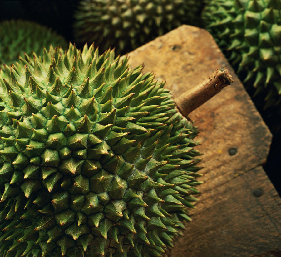 A Durian Fruit - Popular In South East Photograph  - A Durian Fruit - Popular In South East Fine Art Print