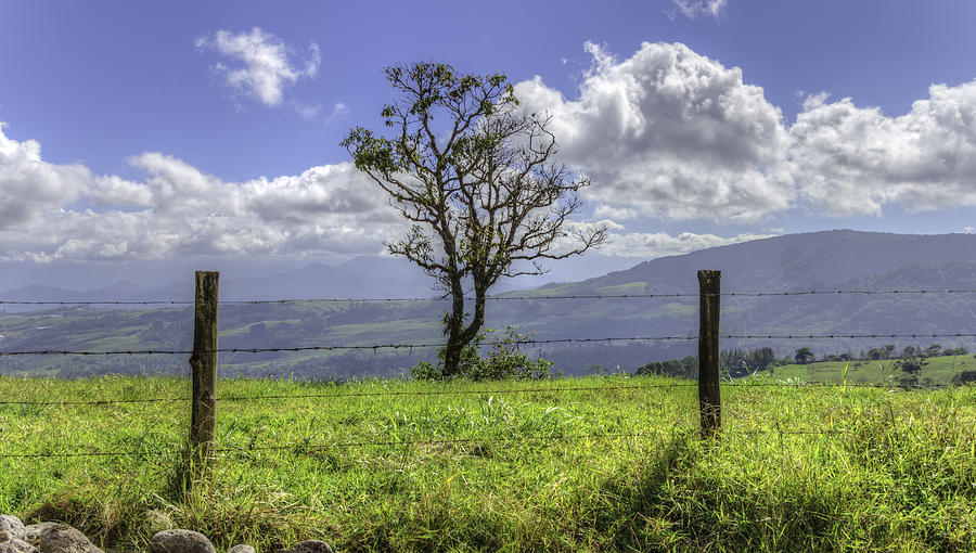 A Fence And A Tree 3552hdr Photograph  - A Fence And A Tree 3552hdr Fine Art Print