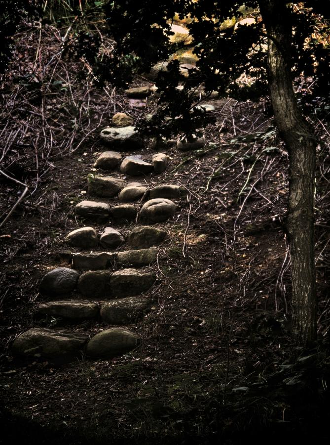 A Few More Steps Photograph  - A Few More Steps Fine Art Print