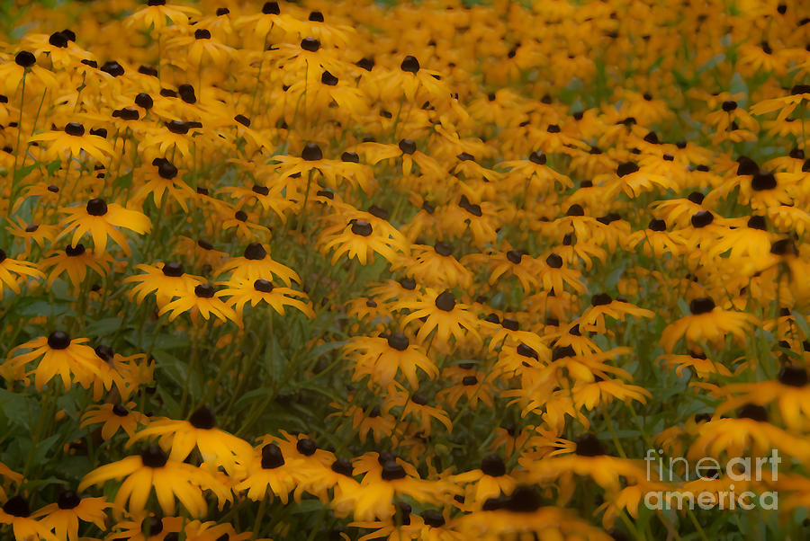 A Field Full Of Flowers Photograph